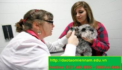 trung cấp chăn nuôi thú y tại phan thiết