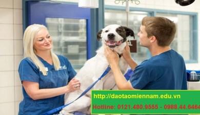 trung cấp chăn nuôi thú y tại quận 1