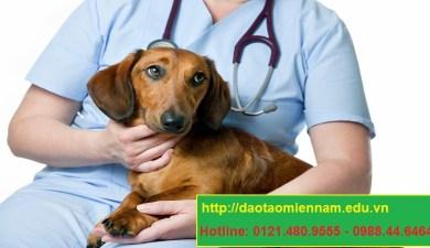trung cấp chăn nuôi thú y tại mỹ tho