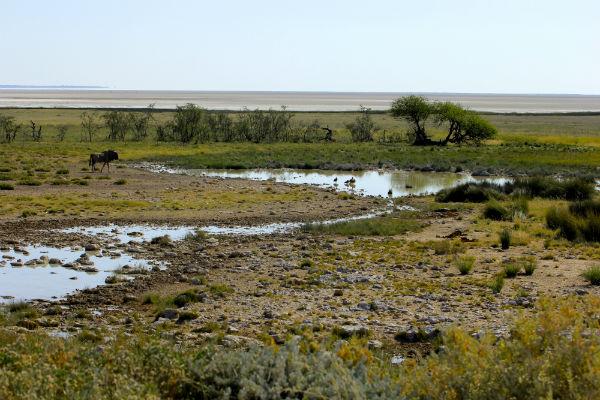 zoutvlakte van etosha in namibie