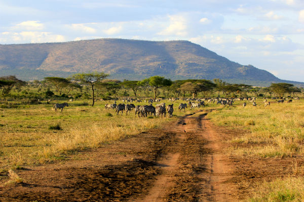serengeti migratie noord tanzania