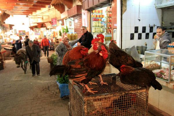 De levendige markt in Fès