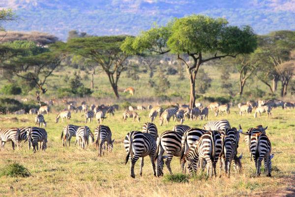 serengeti-noord-tanzania-zebras