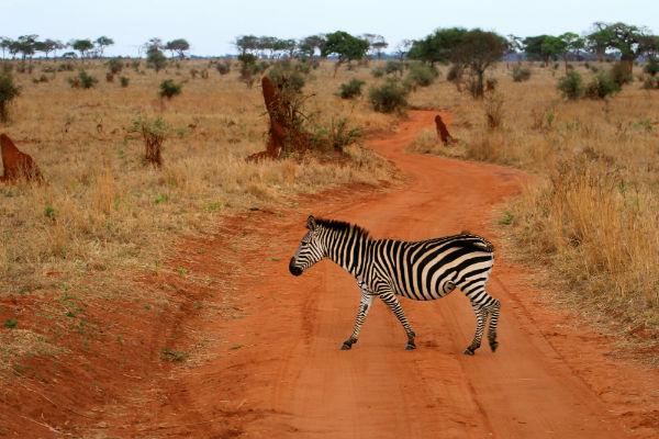 tarangire-national-park-tanzania-zebra-rode-aarde