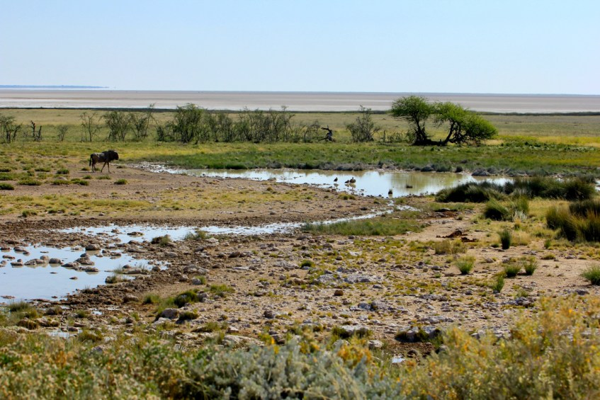 Etosha is een must in je route Namibie