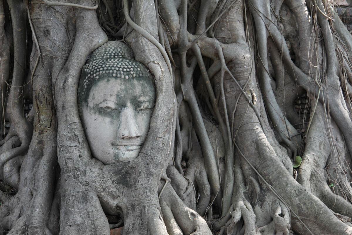 Thailand bezoeken en de prachtige tempels van Ayutthaya ontdekken