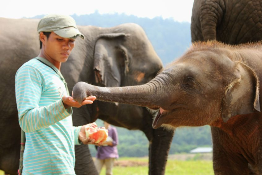 Thailand bezoeken en een olifanten sanctuary bezoeken