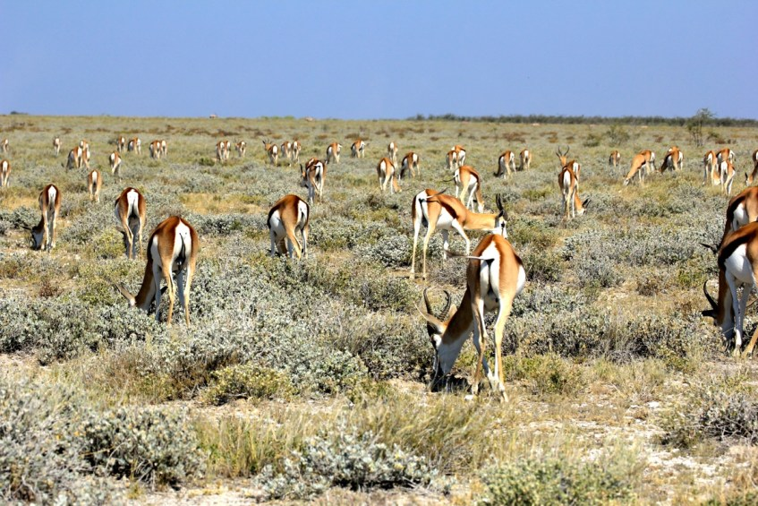 Beestjes spotten in Etosha National Park in Namibie is het leukste dat er is