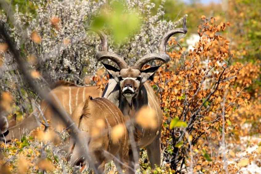 Wildspotten in Namibie kan heel erg goed in Etosha National Park