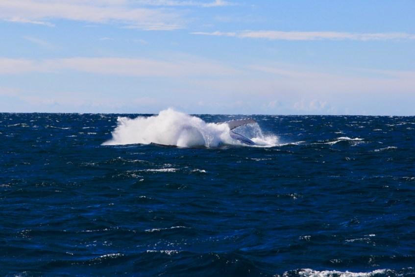 De winterperiode is ideaal voor het spotten van walvissen in Jervis Bay