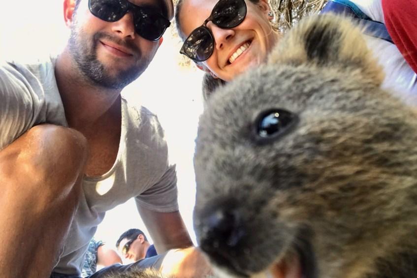 Lachende quokka is een van de 16 unieke dieren in Australië