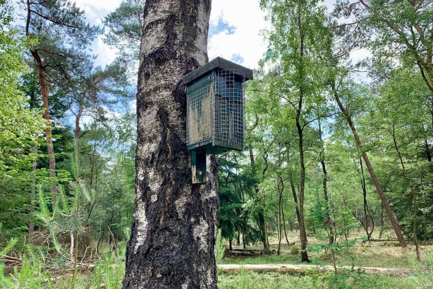 Wandelen op de Veluwe: 5 mooie wandelroutes