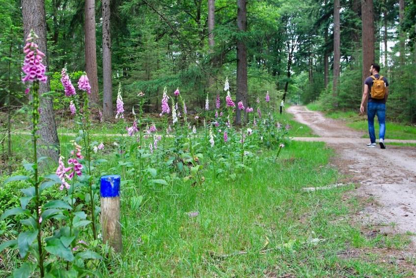 Wandelen op de Veluwe ga naar de Loenermark