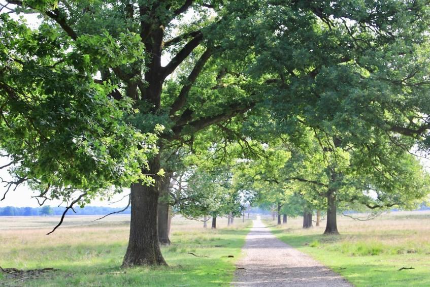 Het Deelerwoud is een mooi wandelgebied op de Veluwe
