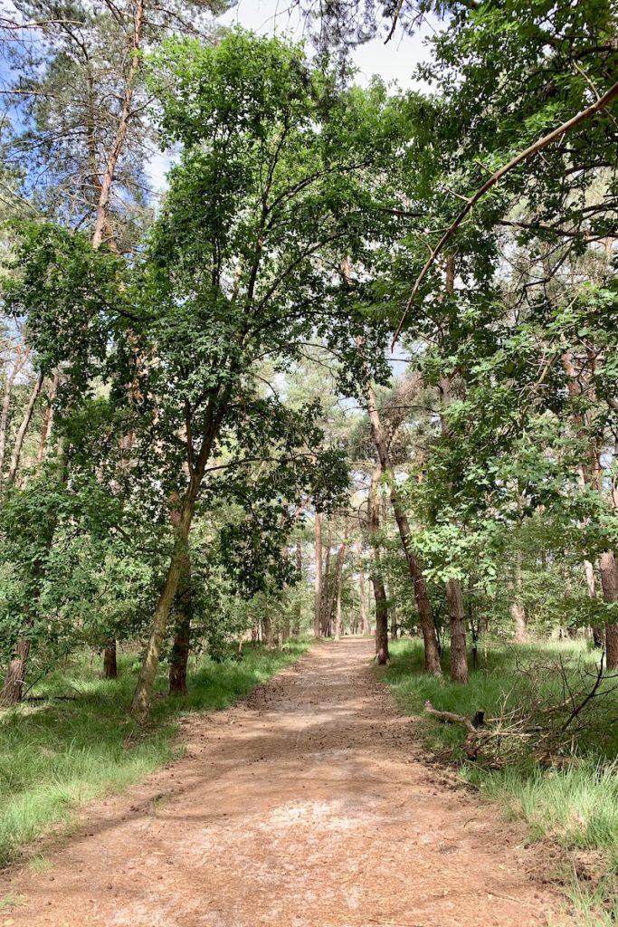 Ontspannen wandelen in Belgie doe je in het Grenspark Kalmthoutse Heide