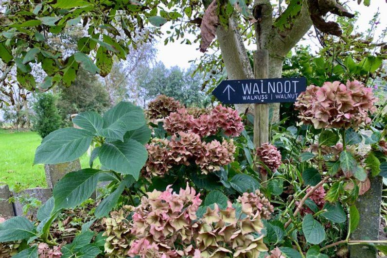 In de zelfpluktuin op Texel kun je lekkere verse producten uit eigen tuin plukken en eten