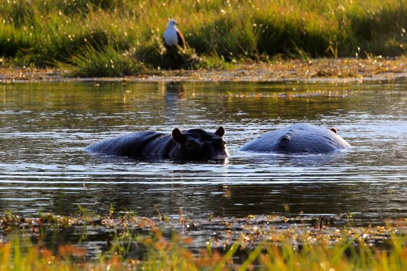 De prachtige Okavango Delta in Botswana moet op jouw bucketlist!