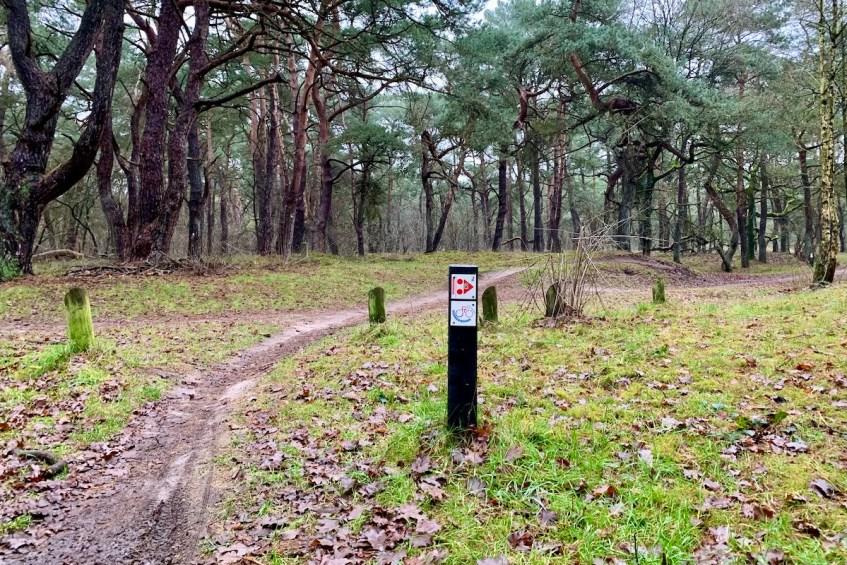Ga wandelen rond Groningen en kies voor de Wandelroute Strubben Kniphorstbosch