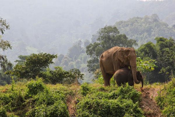 Moeder en dochter olifant