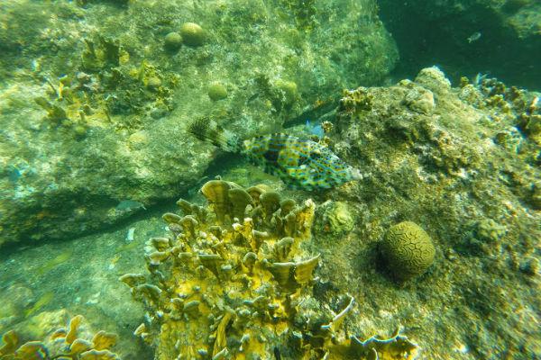 Snorkelen @ Porto Mari