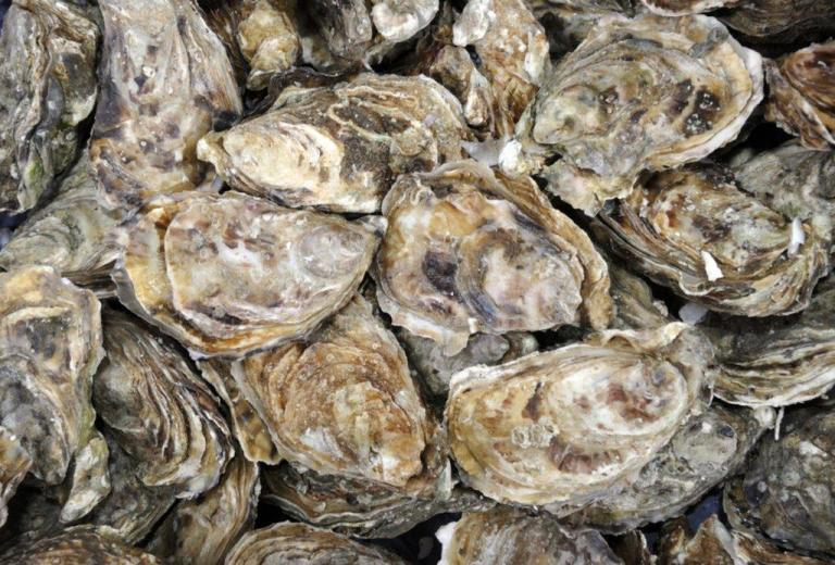 oysters-