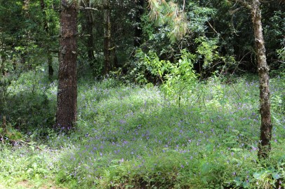 Reminds me of my favoured bluebell forests