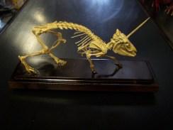 unicorn rat 46