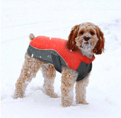 Red Waterproof Winter Dog Coat Dog And Puppy Coat Dapper Dog Duds