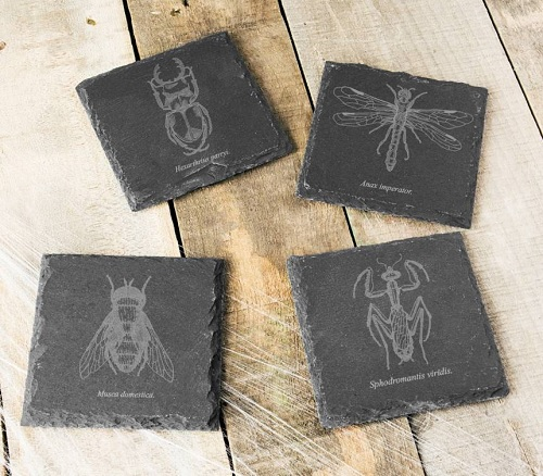 Set of 4 Insect Slate Coasters