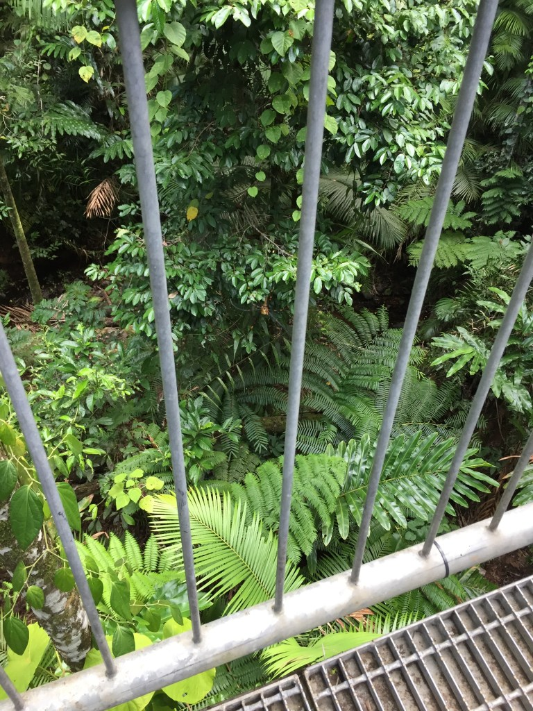 view down off the walkway in the Daintree Rainforest Discovery Centre