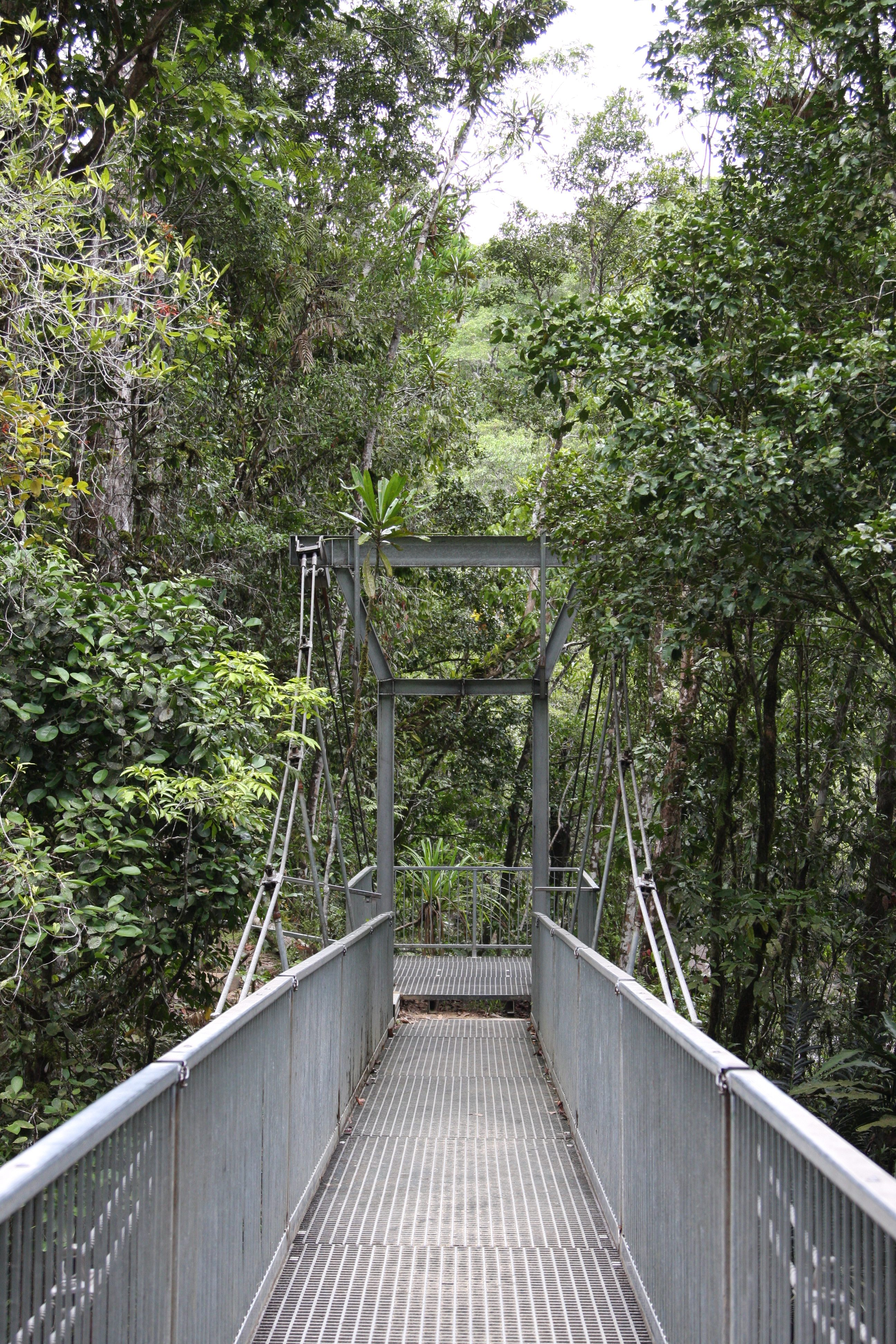 metal suspension bridge at the Mossman Gorge in the Daintree Rainforest