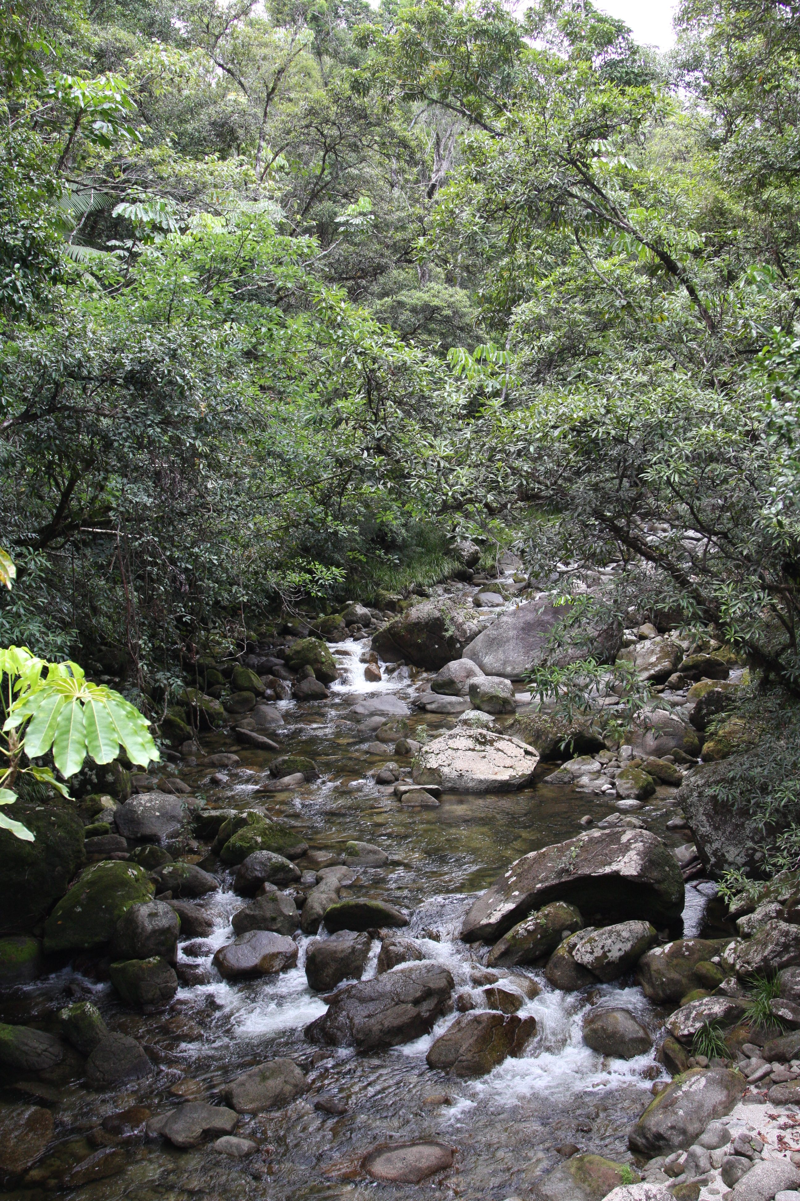 flowing water over rocks surrounded by trees in the Mossman Gorge