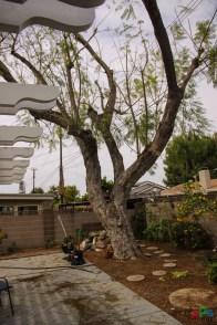 Mr. DAPs Railway Tree Removal-1