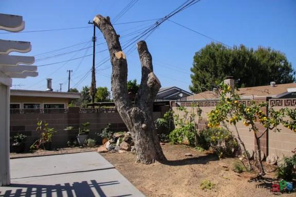 Mr. DAPs Railway Tree Removal-11
