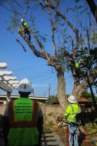 Mr. DAPs Railway Tree Removal-4