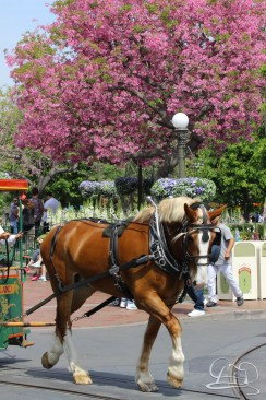Soundsational Alice at the Disneyland Resort-3