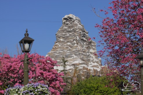 Springtime at Disneyland - February_21_2016-66