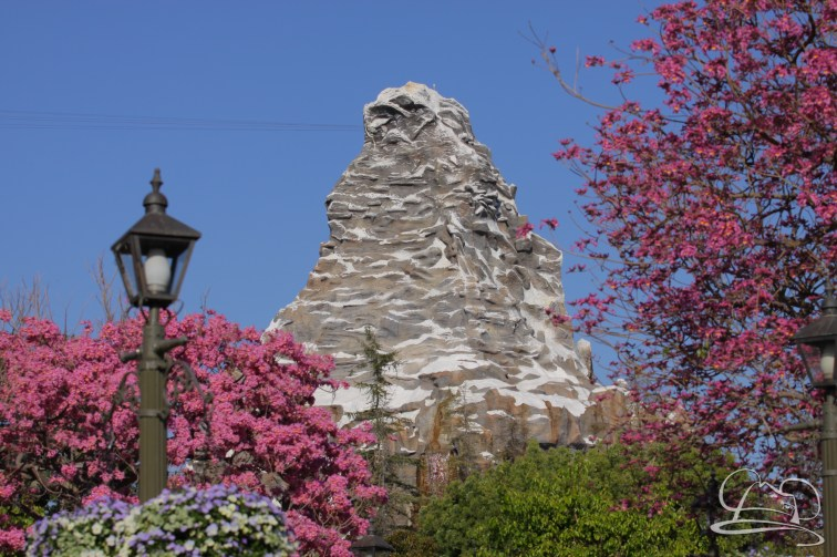 Springtime at Disneyland - February_21_2016-66