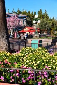 DisneylandSpringtime 9