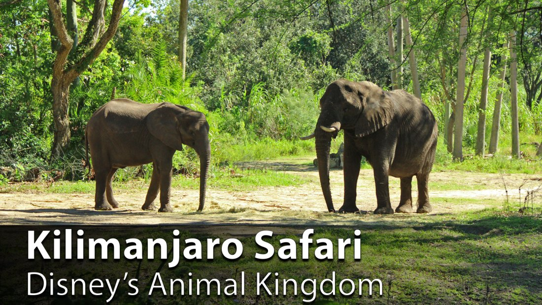 Kilimanjaro Safari - Disney's Animal Kingdom