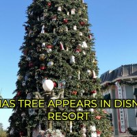 Christmas Trees Make Their Holiday Home Around Disneyland Resort
