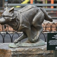 Disney+ celebrates Togo with new plaque honoring hero sled dog at New York City's Seward Park