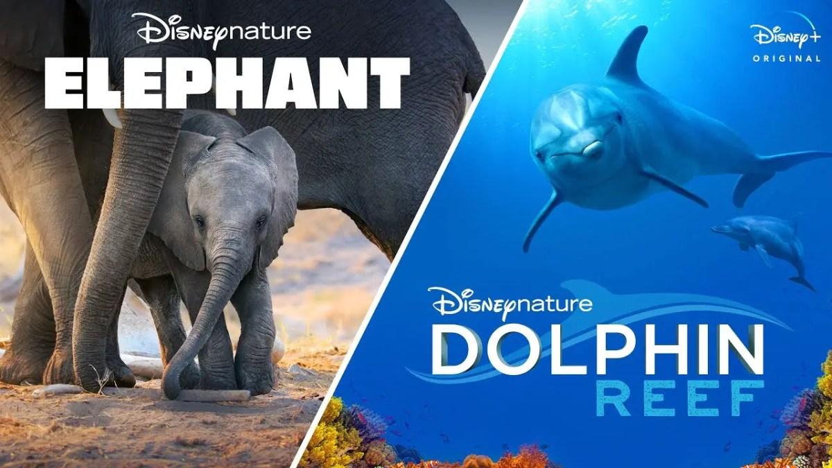Elephant & Dolphin Reef