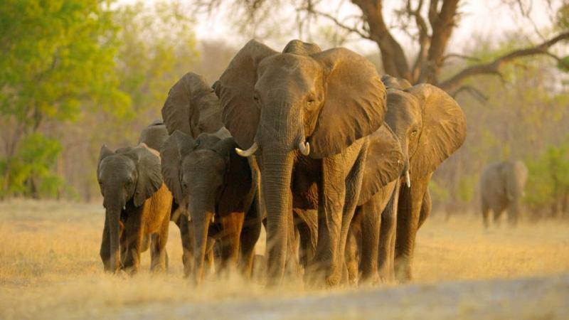Disneynature Elephant