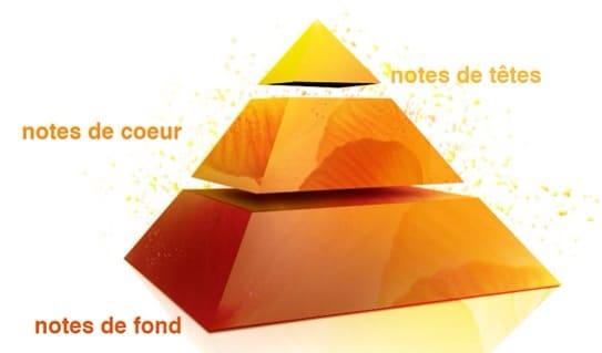 La pyramide olfactive.