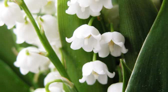 Les fleurs muettes
