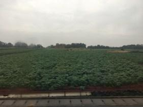 Many fields