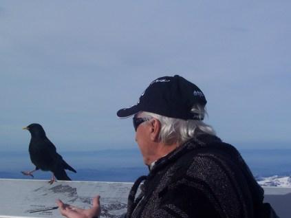 crow dances