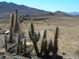 spiky cactus fence