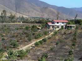cut back fruit trees near Pedegua